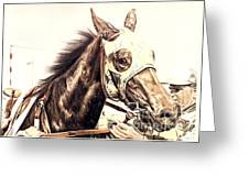 Racehorse Greeting Card