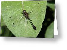 Racket-tailed Emerald Dragonfly Greeting Card