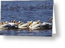 Raft Of Pelicans Greeting Card