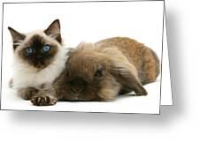 Ragdoll Kitten And Lionhead Rabbit Greeting Card