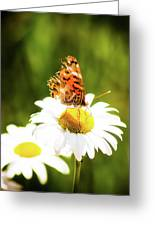 Raggedy Butterflly Greeting Card