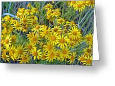 Ragwort - Tansy Greeting Card