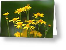 Ragwort Greeting Card