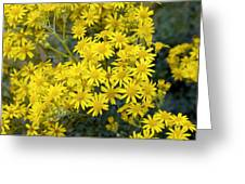 Ragwort (senecio Jacobaea) Greeting Card