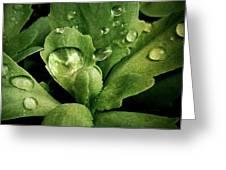 Rain All Day Greeting Card