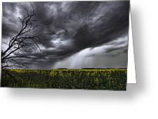 Rain And Thunderstorm Over A Canola Greeting Card
