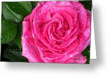 Rain Drenched Rose Greeting Card