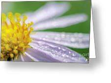 Rain Drop On Flower Greeting Card