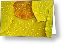 Rain Drops On Aspen Leaves In Autumn Greeting Card