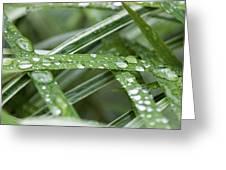 Rain Drops On Grasses Greeting Card