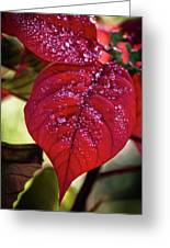 Rain Drops On Red Leaves Greeting Card