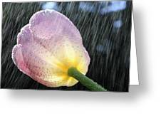 Rain Falling On A Tulip Greeting Card