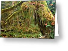 Rain Forest Crocodile Greeting Card