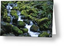 Rain Forest Stream Greeting Card