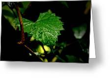 Rain On Ivy Greeting Card