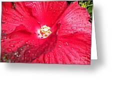 Rain On Red Greeting Card