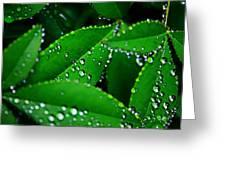 Rain Patterns Greeting Card