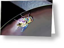 Rainbow Fly Greeting Card