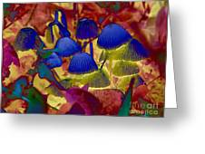 Rainbow Mushrooms Greeting Card