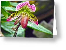 Rainbow Orchid Greeting Card