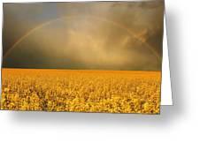 Rainbow Over Farmers Field Greeting Card