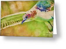 Rainbow Seagull Greeting Card