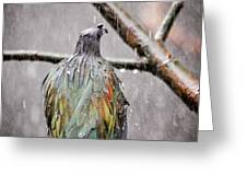 Rainbow Showers Greeting Card