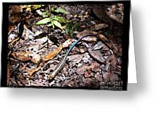 Rainbow Skink Greeting Card