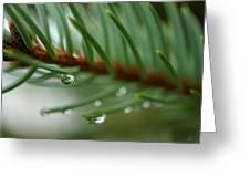 Raindrops And Fir Needles Greeting Card