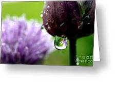 Raindrops On Chives In Bloom Greeting Card