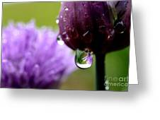 Raindrops On Chives Greeting Card