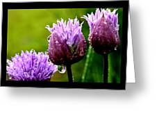 Raindrops On Chives Triptych Greeting Card