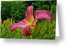Raindrops On Lilly Greeting Card