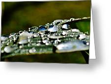 Raindrops On Lily Leafs Greeting Card