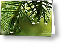 Raindrops On Pine Needles Greeting Card