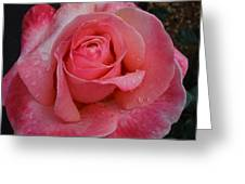 Raindrops On Roses Eight Greeting Card