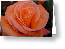 Raindrops On Roses Seven Greeting Card