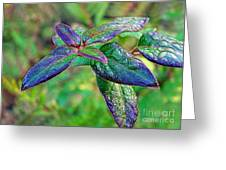 Raindrops On The Leaves Greeting Card