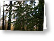 Raindrops On The Spruce Twig Greeting Card