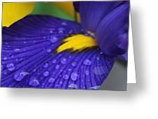 Raindrops Purple Dutch Iris Flower Greeting Card