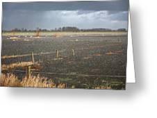 Rainfall Greeting Card