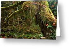 Rainforest Jaws Greeting Card