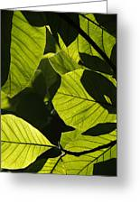 Rainforest Leaves Showing Sunlight Greeting Card