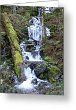 Rainforest Waterfall Greeting Card