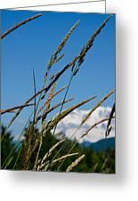 Rainier Weeds Greeting Card