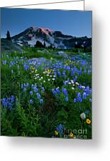 Rainier Wildflower Dawn Greeting Card by Mike  Dawson
