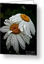 Rainy Day Daisies Greeting Card