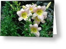 Rainy Day Day Lilies Greeting Card