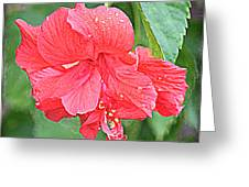 Rainy Day Hibiscus Greeting Card
