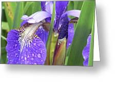 Rainy Day Iris  Greeting Card